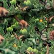 Kép 1/2 - Prémium pamut jersey, Jurassic World